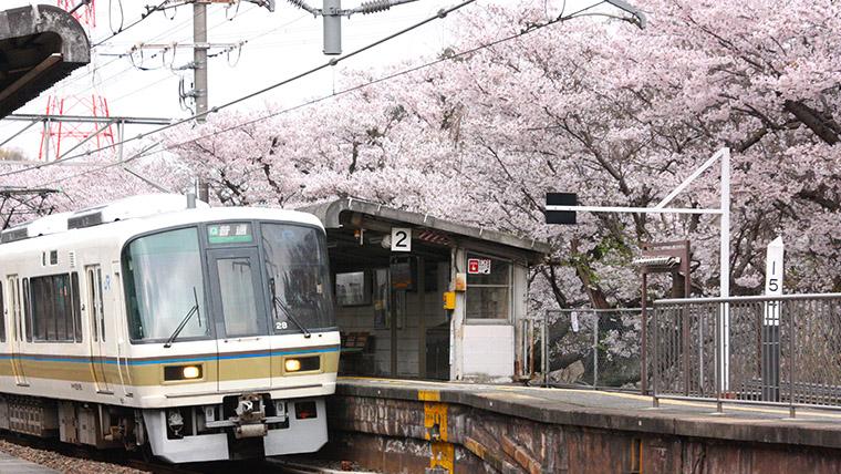 JR関西本線 河内堅上駅の桜