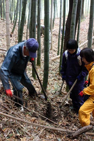 青谷で筍(タケノコ)掘り