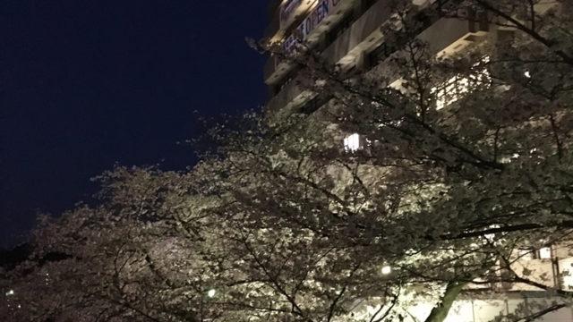 ライトアップされた桜で風情を(玉手山学園にて)